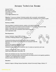 Textedit Resume Template - Resume Resume Template Microsoft Word New Tex Templates Standard